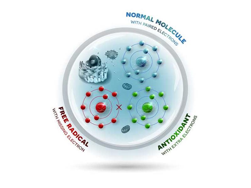 La protección antioxidante de CELLFOOD®